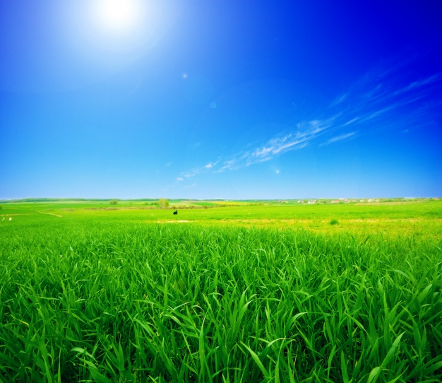 padang ragut rumput