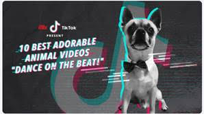 iflix TikTok Animal