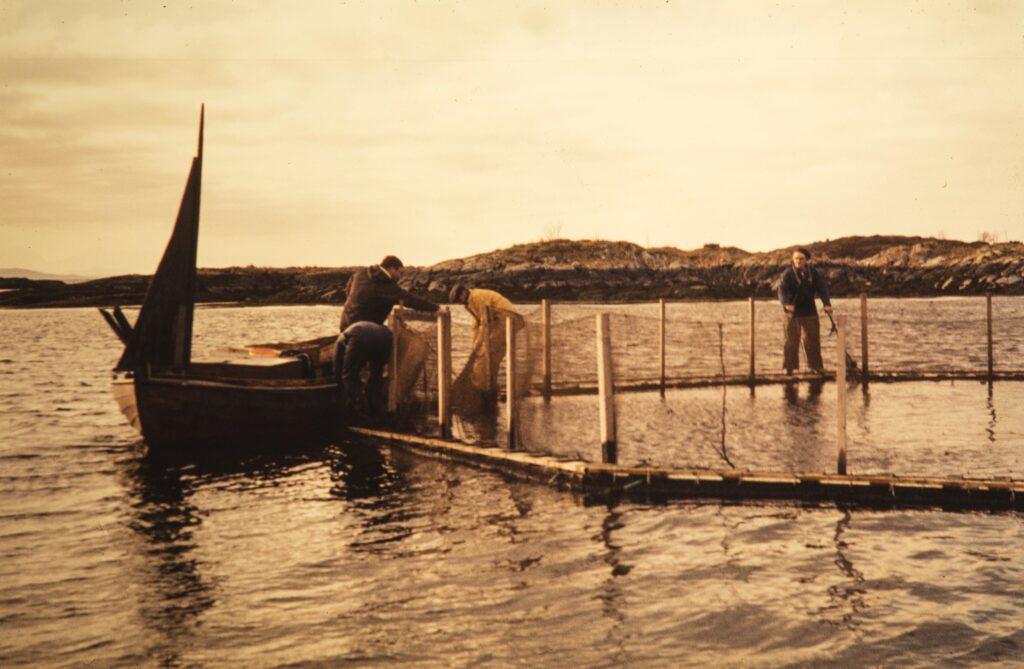 Penternakan salmon oleh saudara Grøntvedt di Hitra, 1972. Gambar oleh Nationalbiblioteket, Magnus Berg.